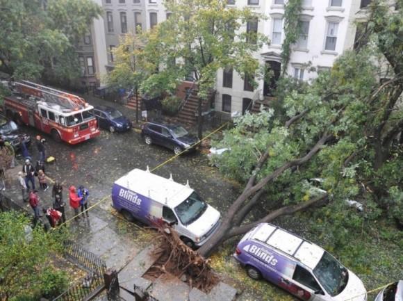 Sandy Ouragan - Des arbres déracinés (New York)