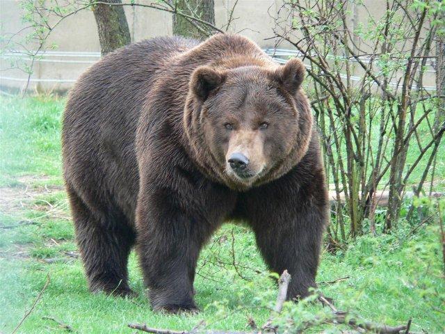 Rencontre avec un ours brun