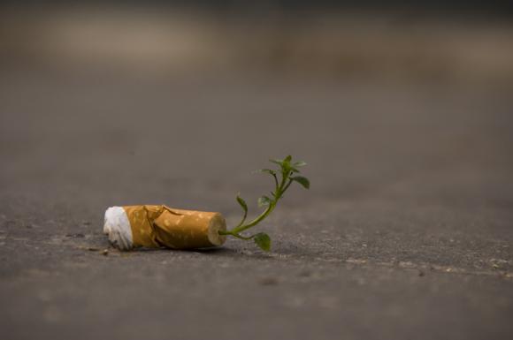 Les-megots-de-cigarettes-se-transforment-en-plantes-1