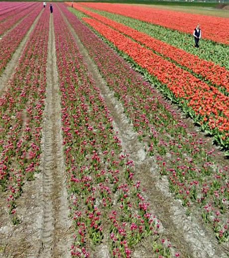 google-maps-ce-champs-de-fleurs-plein-de-couleurs-est-arpente-par-des-touristes_129625_w460