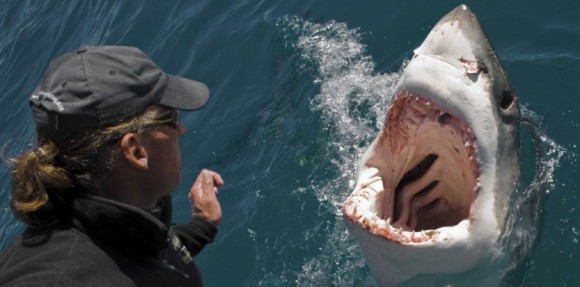 6173396-video-l-attaque-d-un-grand-requin-blanc-vue-du-ciel