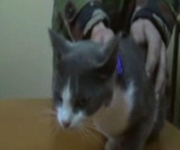 Un chat de contrebande de drogues