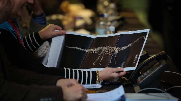 Un soumissionnaire regarde une photographie du squelette de diplodocus de 17 mètres de long