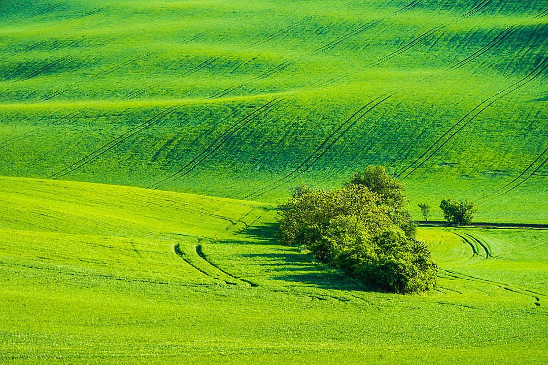 Arbres Champs Vert Nature
