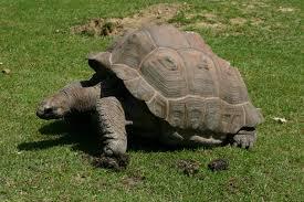 la tortue peut engendrer une infection chez les enfants de moins de 5ans