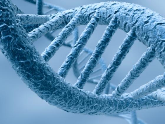l'ADN endommagé pourra être réparé