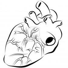 réduire les risques cardio-vasculaire une nécessité non une alternative