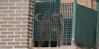 Le chien de l'aide-soignante espagnole atteinte par le virus Ebola a été euthanasié