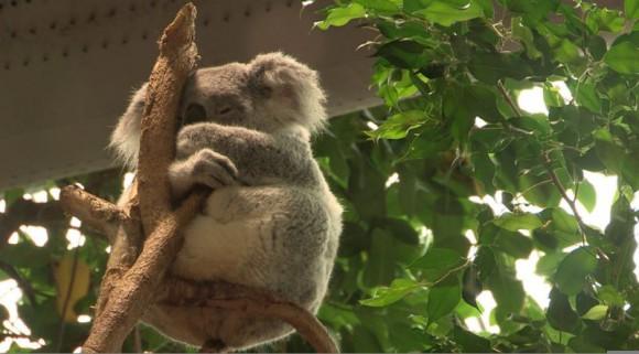 Zone Interdite sur le Zoo de Beauval ce 20 juillet sur M6