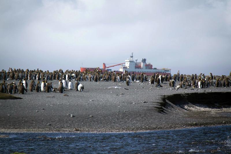Regarder Thalassa sur France 3 en vidéo : Replay documentaire Coup de chaud sur l'Antarctique