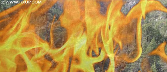 Incendie d'un forêt de pins à Jendouba